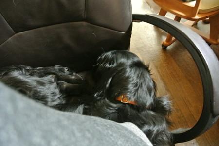 私の椅子の後ろ