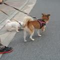 Photos: 散歩出来た時は最高に嬉しかった
