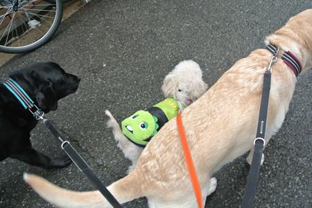 でっかい犬とも仲良く歩けるよ