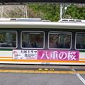 Photos: 八重の桜号