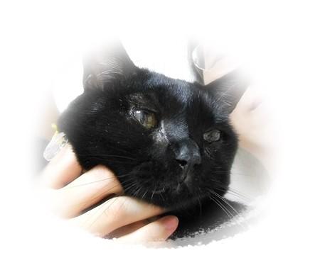 黒猫同好会、猫の防災手帳を作りました