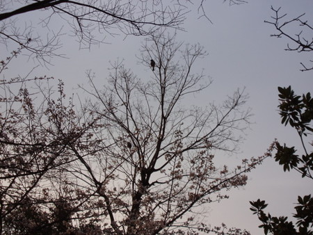 2013.03.30 マンション敷地内に小鳥の巣箱を設置