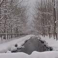 やっと雪景色