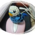 編みぐるみ インコ