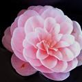 Photos: 花は咲く
