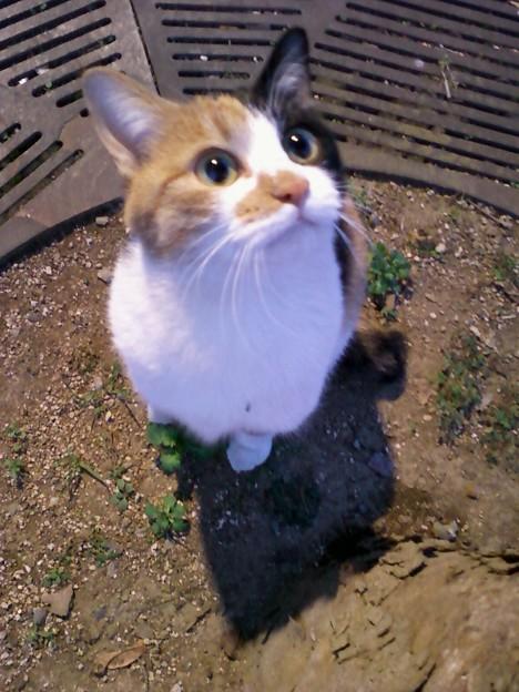 駅で会った猫