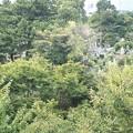 パークビュー西麻布601~寝室眺望(墓地)