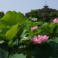 Photos: 1三渓園観蓮会0729a