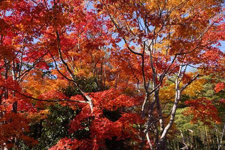 燃える秋の木立!2012