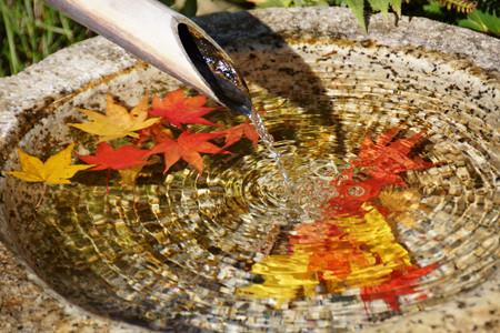水鉢に浮かぶモミジ!2012