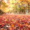 写真: 落ち葉の参道!2012k