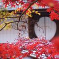 Photos: 丸窓に紅葉!2012