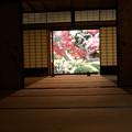 Photos: 額縁越しのモミジ!2012