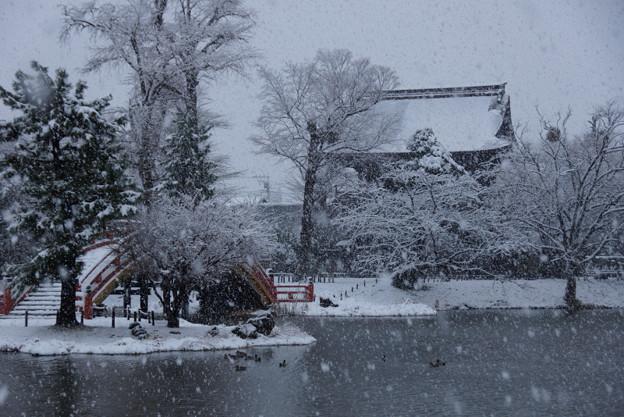 Photos: 称名寺仁王門の雪景色!2013