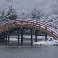 Photos: 雪の反り橋!2013