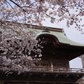 写真: 桜彩どる仁王門!130323