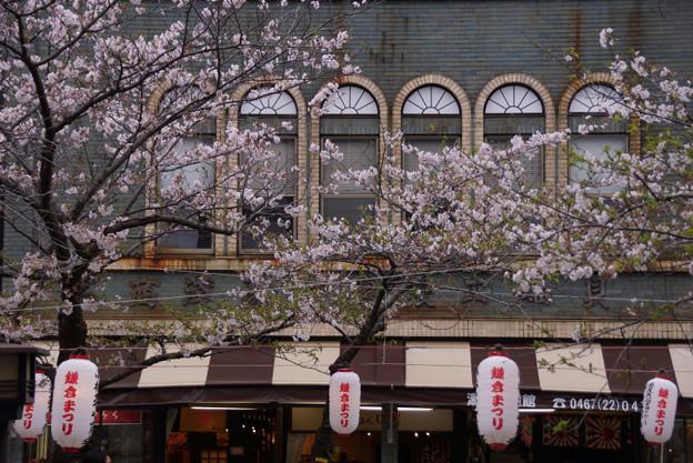 桜の彩る古建築物!