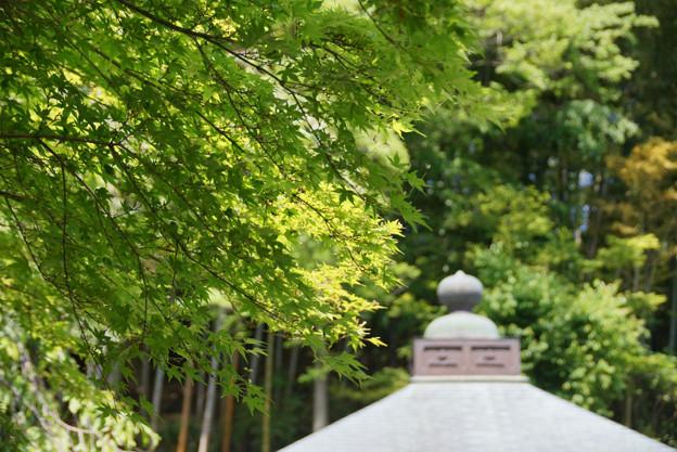 Photos: 春紅葉の東慶寺!130427
