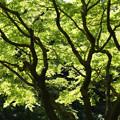 Photos: 春紅葉の枝ぶり!