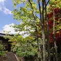 写真: 海蔵寺山門の新緑!130512