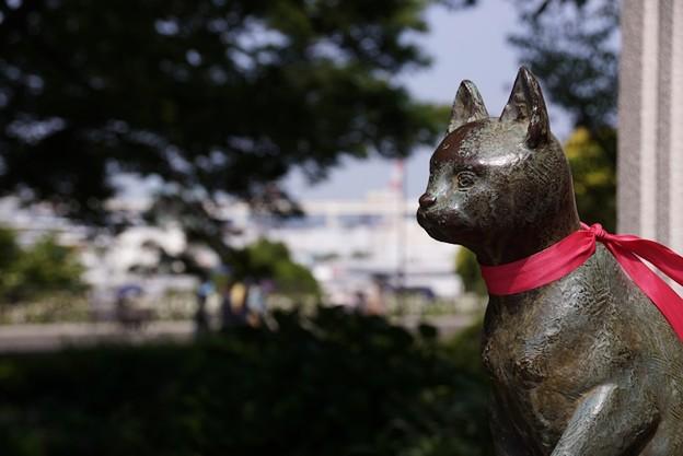 写真: 大佛記念館の猫!130525