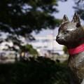 Photos: 大佛記念館の猫!130525