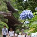 Photos: 仏殿と紫陽花130622-153