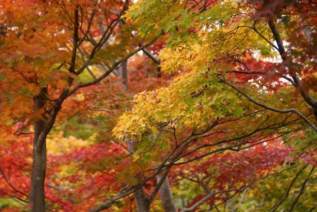 Photos: 紅葉と日本庭園131109-419