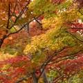 写真: 紅葉と日本庭園131109-419