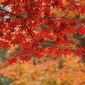 Photos: 紅葉131109-260