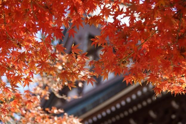 仏殿と紅葉131123-132