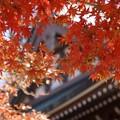 写真: 仏殿と紅葉131123-132