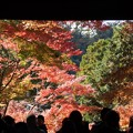 Photos: 総門の紅葉131123-336