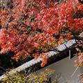 写真: 紅葉松が岡宝蔵131123-059