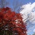 写真: 詩仙堂の紅葉!131201