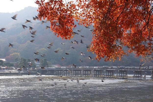 渡月橋と紅葉!131202