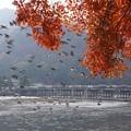写真: 渡月橋と紅葉!131202