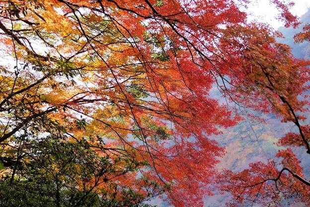 写真: 嵐山のモミジの彩!131202