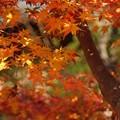 写真: 黄葉の嵯峨野!131202