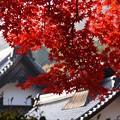 写真: 紅葉の寺院!131202