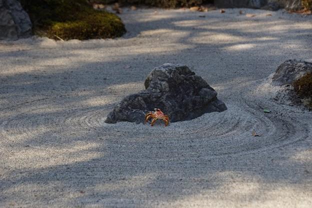 枯山水の沢蟹!140101