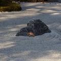 写真: 枯山水の沢蟹!140101