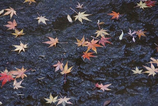 写真: 散紅葉の川!140101