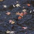 Photos: 散紅葉の川!140101