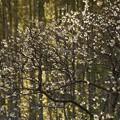 写真: 竹林とロウバイ!140118