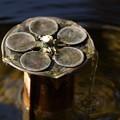 写真: 手水舎の梅模様!140118