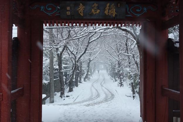 写真: 称名寺赤門からの雪景色!140208