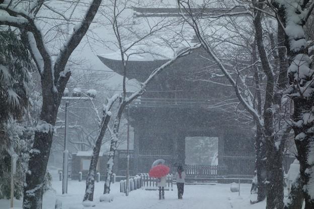 写真: 大雪と称名寺仁王門!140208