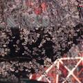 Photos: 枝垂れ桜と本堂!