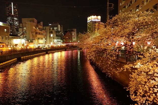 夜桜まつり、大岡川!